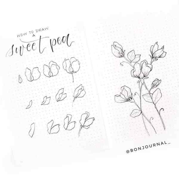 How to draw a sweet pea.