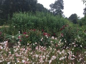 Vira Vira Flowers & Herbs