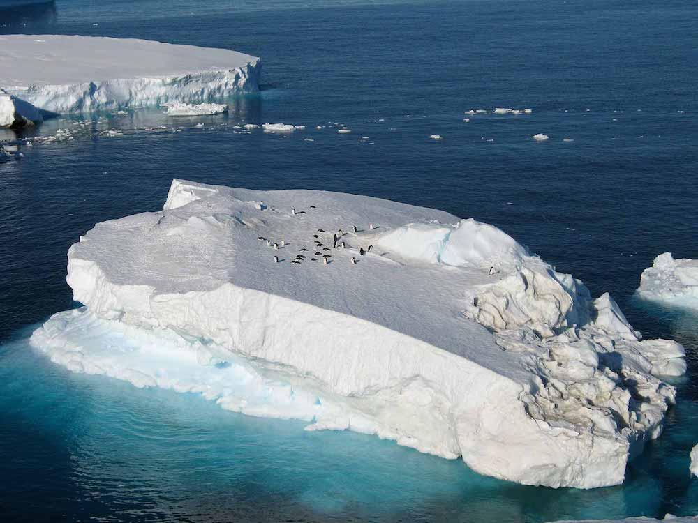 Emperor Penguins, Antarctica | Plan South America