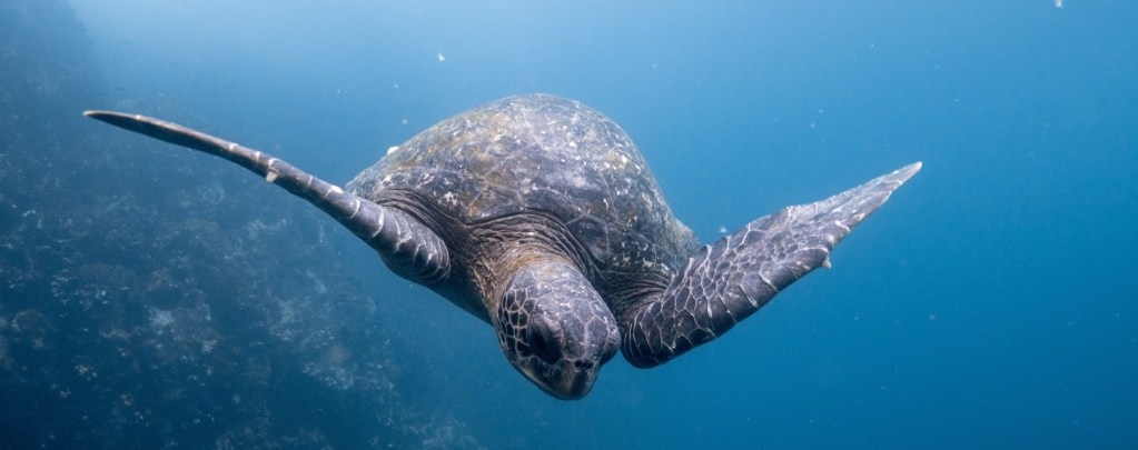 The Galapagos   Your Questions Answered