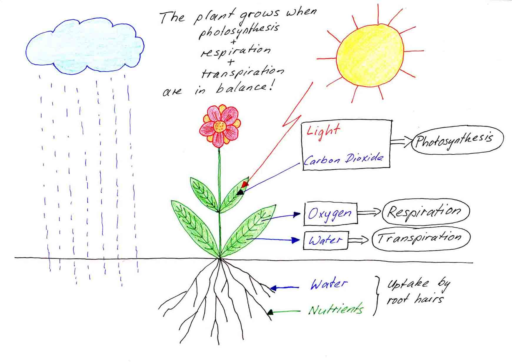 How Do Plants Grow Free Information On Plant Development