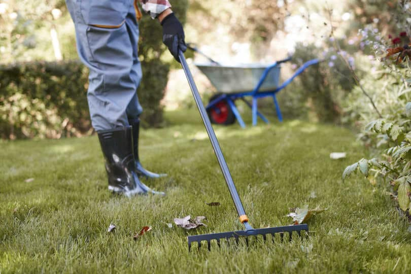 Gardener raking leaves in the garden with bow rake