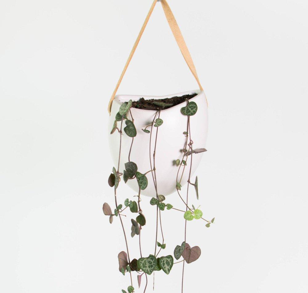 Indoor Plants And Pots
