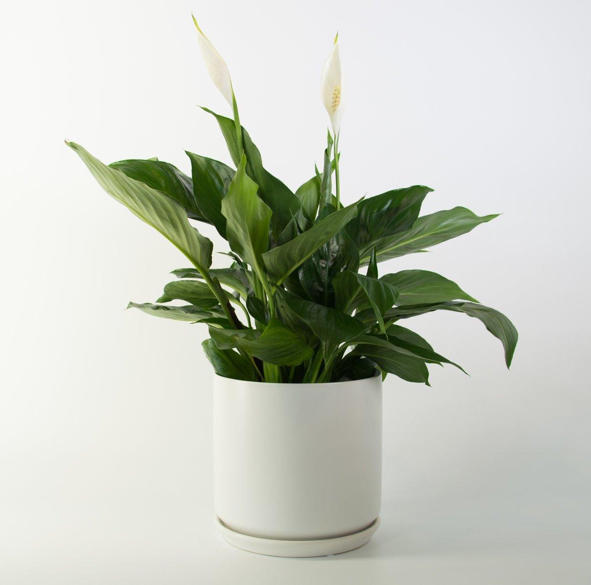 Tall Planters Nz