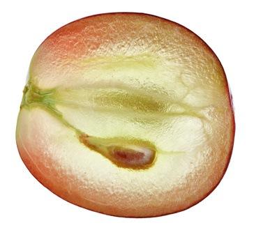 Semilla de la uva