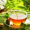 4 Plantas medicinales para combatir Resfriados