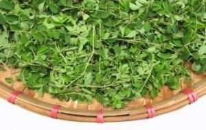 Moringa como complemento nutricional para diabetes, desnutrición, anorexia, etc