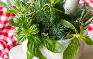 Medicina tradicional de Irán: estudio sobre las plantas medicinales