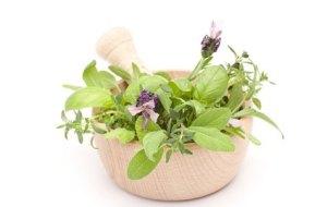 Fitoterapia: la curación con plantas medicinales ¿es efectiva?