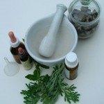 Ajenjo: Planta medicinal útil como Digestivo, para Reumas, Parásitos…
