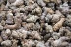 Notoginseng (Panax pseudoginseng Wall): Usos medicinales. Medicina tradicional China