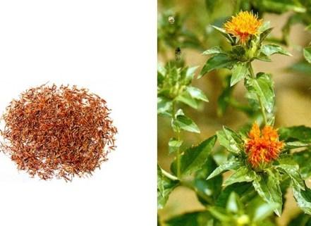 Propiedades del Azafrán Chino o Flor de Cártamo (Carthamus tinctorius L.)