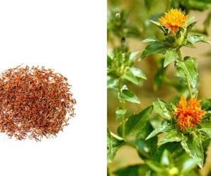 Azafrán chino o flor de cártamo. Carthamus tinctorius L.