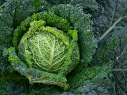 Brassica_oleracea_brecol