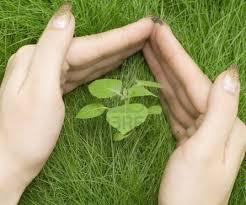 proteger_plantas