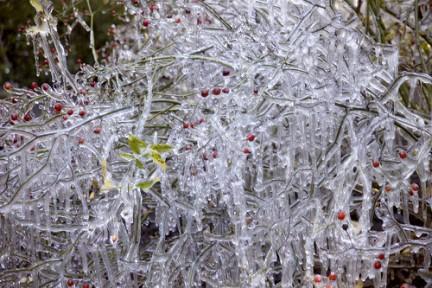 Plantas que no sienten frío