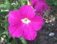 Tipos de flores 1
