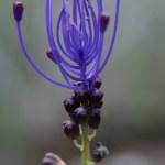Plantas curiosas 3