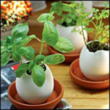 Huevos con plantas