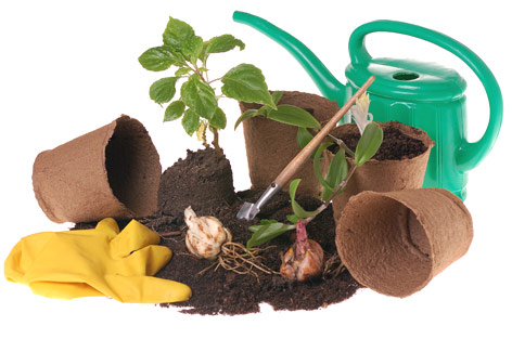 Enfermedades de las plantas: Ácaros