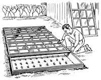 Cómo crear un semillero