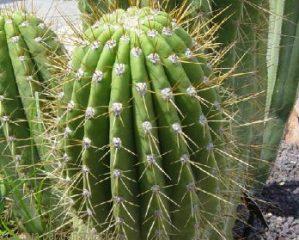 Cómo saber si una planta necesita agua 1