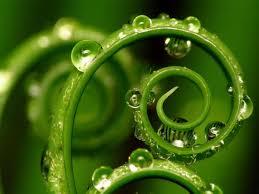 Las plantas piensan, recuerdan y actúan