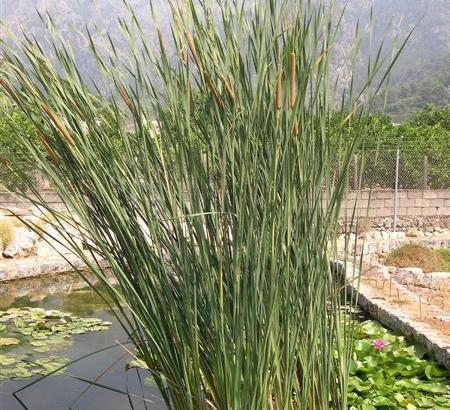 Investigan las mejores plantas contra la contaminación