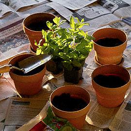 Trasplantes urgentes de plantas en verano