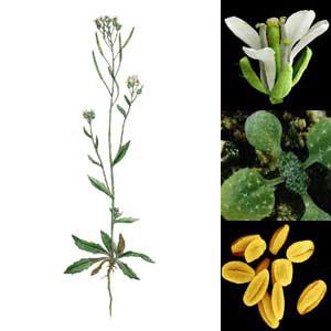 Investigación sobre el reloj biológico de las plantas