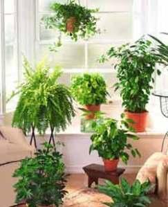 Cómo regar una planta de interior