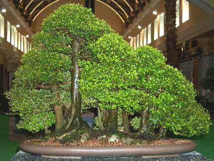 Bosque de bonsáis
