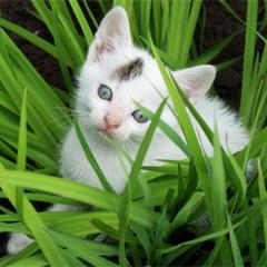 Plantas dañinas para mascotas