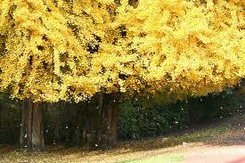 Consejos sobre plantas en noviembre
