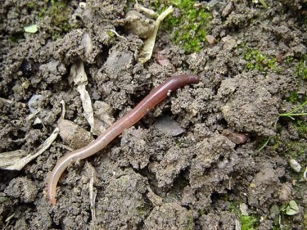 Cómo eliminar parásitos del suelo