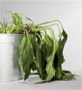 Qué puede pudrir las raíces
