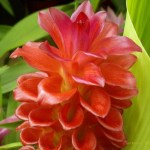 Flores hechas con macro 1