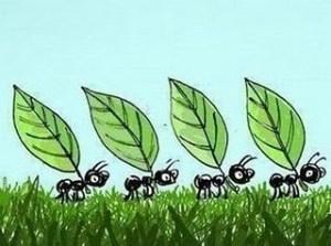 Cómo impedir a las hormigas entrar en casa