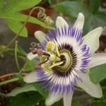 Flores hechas con macro 2