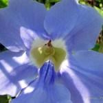 Flores hechas con macro 5