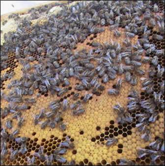 Consejos para protegerse ante abejas