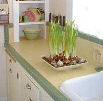 Hacer florecer bulbos