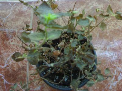 Defensa de las plantas frente a la luz