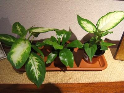 Ventajas de las plantas de interior