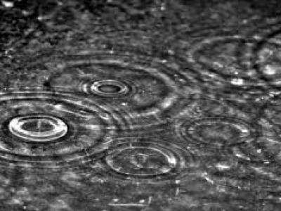 Agua de lluvia para tus plantas