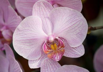 Leyendas de flores: el origen de la orquídea
