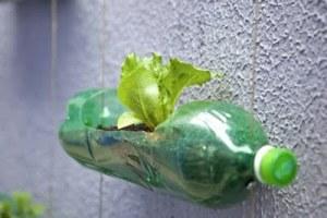 Recicla las botellas para plantar