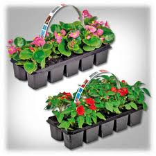 Ofertas en plantas