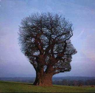 Problemas de los árboles