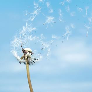 Proteger las plantas del viento